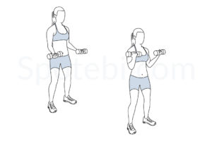 Bicep curls exercise guide with instructions, demonstration, calories burned and muscles worked. Learn proper form, discover all health benefits and choose a workout. http://www.spotebi.com/exercise-guide/biceps-curl/