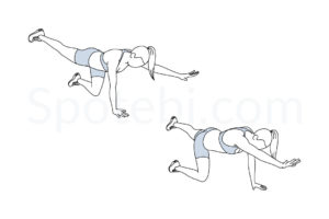 Bird dogs exercise guide with instructions, demonstration, calories burned and muscles worked. Learn proper form, discover all health benefits and choose a workout. http://www.spotebi.com/exercise-guide/bird-dogs/