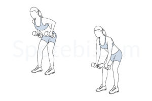 Dumbbell bent over row exercise guide with instructions, demonstration, calories burned and muscles worked. Learn proper form, discover all health benefits and choose a workout. http://www.spotebi.com/exercise-guide/dumbbell-bent-over-row/