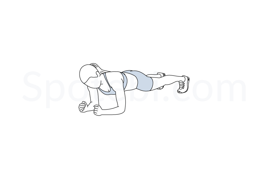 Plank | Illustrated Exercise Guide