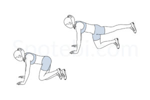 Donkey kicks exercise guide with instructions, demonstration, calories burned and muscles worked. Learn proper form, discover all health benefits and choose a workout. https://www.spotebi.com/exercise-guide/donkey-kicks/