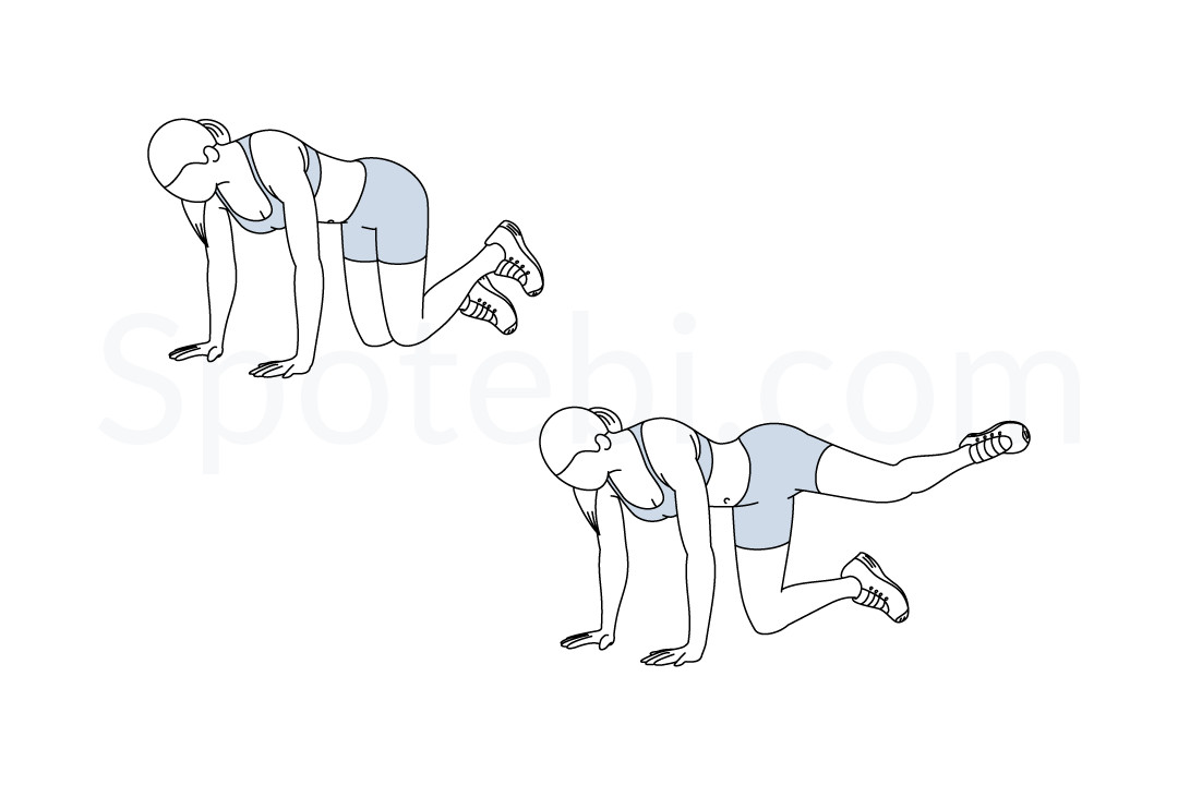 Fire hydrant exercise guide with instructions, demonstration, calories burned and muscles worked. Learn proper form, discover all health benefits and choose a workout. https://www.spotebi.com/exercise-guide/fire-hydrant/
