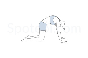 Cat pose (Marjaryasana) instructions, illustration and mindfulness practice. Learn about preparatory, complementary and follow-up poses, and discover all health benefits. https://www.spotebi.com/exercise-guide/cat-pose/