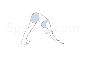 Downward facing dog pose (Adho Mukha Svanasana) instructions, illustration and mindfulness practice. Learn about preparatory, complementary and follow-up poses, and discover all health benefits. http://www.spotebi.com/exercise-guide/downward-facing-dog-pose/
