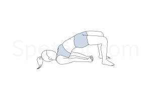 Bridge pose (Setu Bandha Sarvangasana) instructions, illustration and mindfulness practice. Learn about preparatory, complementary and follow-up poses, and discover all health benefits. http://www.spotebi.com/exercise-guide/bridge-pose/