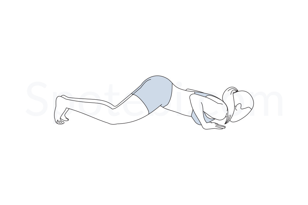 Knees chest chin pose (Ashtanga Namaskara) instructions, illustration and mindfulness practice. Learn about preparatory, complementary and follow-up poses, and discover all health benefits. https://www.spotebi.com/exercise-guide/ashtanga-namaskara/
