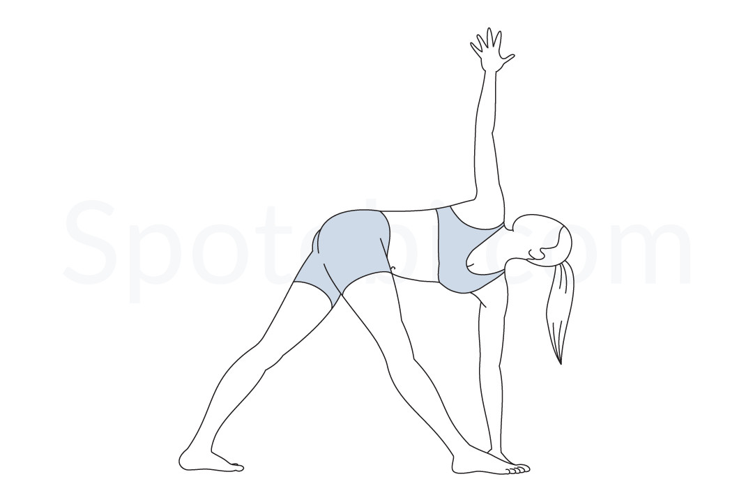 Revolved triangle pose (Parivrtta Trikonasana) instructions, illustration, and mindfulness practice. Learn about preparatory, complementary and follow-up poses, and discover all health benefits. https://www.spotebi.com/exercise-guide/revolved-triangle-pose/
