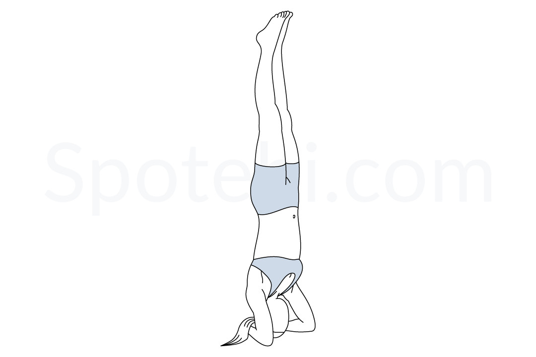 Bound headstand pose (Baddha Hasta Sirsasana) instructions, illustration, and mindfulness practice. Learn about preparatory, complementary and follow-up poses, and discover all health benefits. https://www.spotebi.com/exercise-guide/bound-headstand-pose/