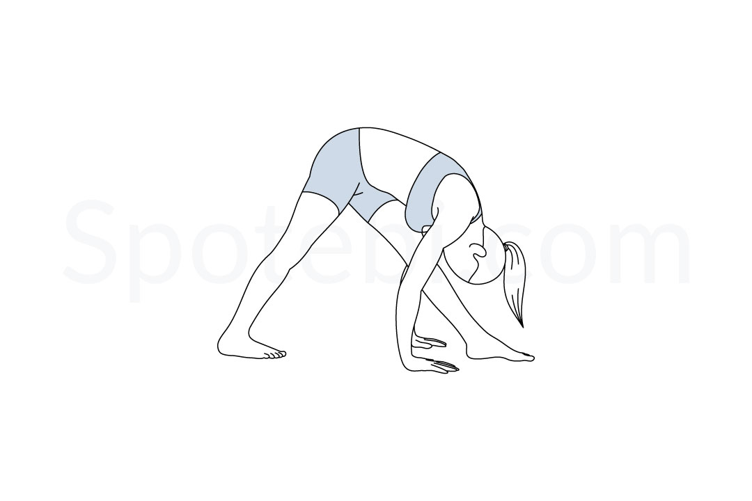 Intense side stretch pose (Parsvottanasana) instructions, illustration, and mindfulness practice. Learn about preparatory, complementary and follow-up poses, and discover all health benefits. https://www.spotebi.com/exercise-guide/intense-side-stretch-pose/